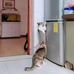 """Lo spuntino - """"Impossible Mission Force"""" feline ..."""