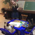 Lezioni di recupero...per gatti svogliati e disattenti